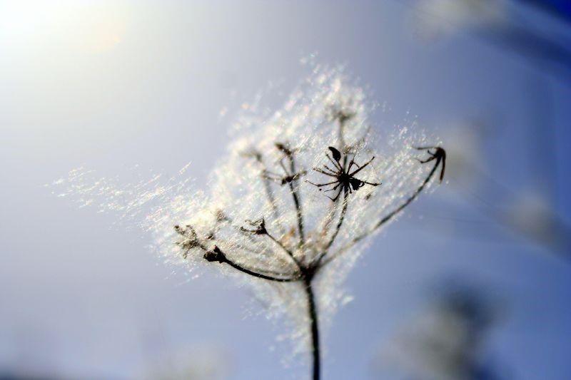 Con la floración de muchas plantas durante la primavera se agudizan los síntomas de las alergias primaverales.