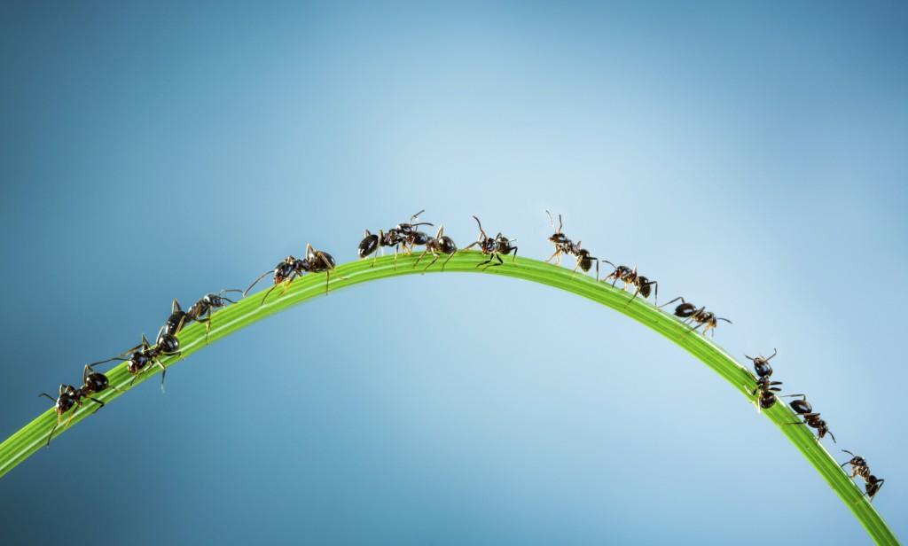 Con la llegada del calor también podemos encontrarnos hormigas en nuestra casa.
