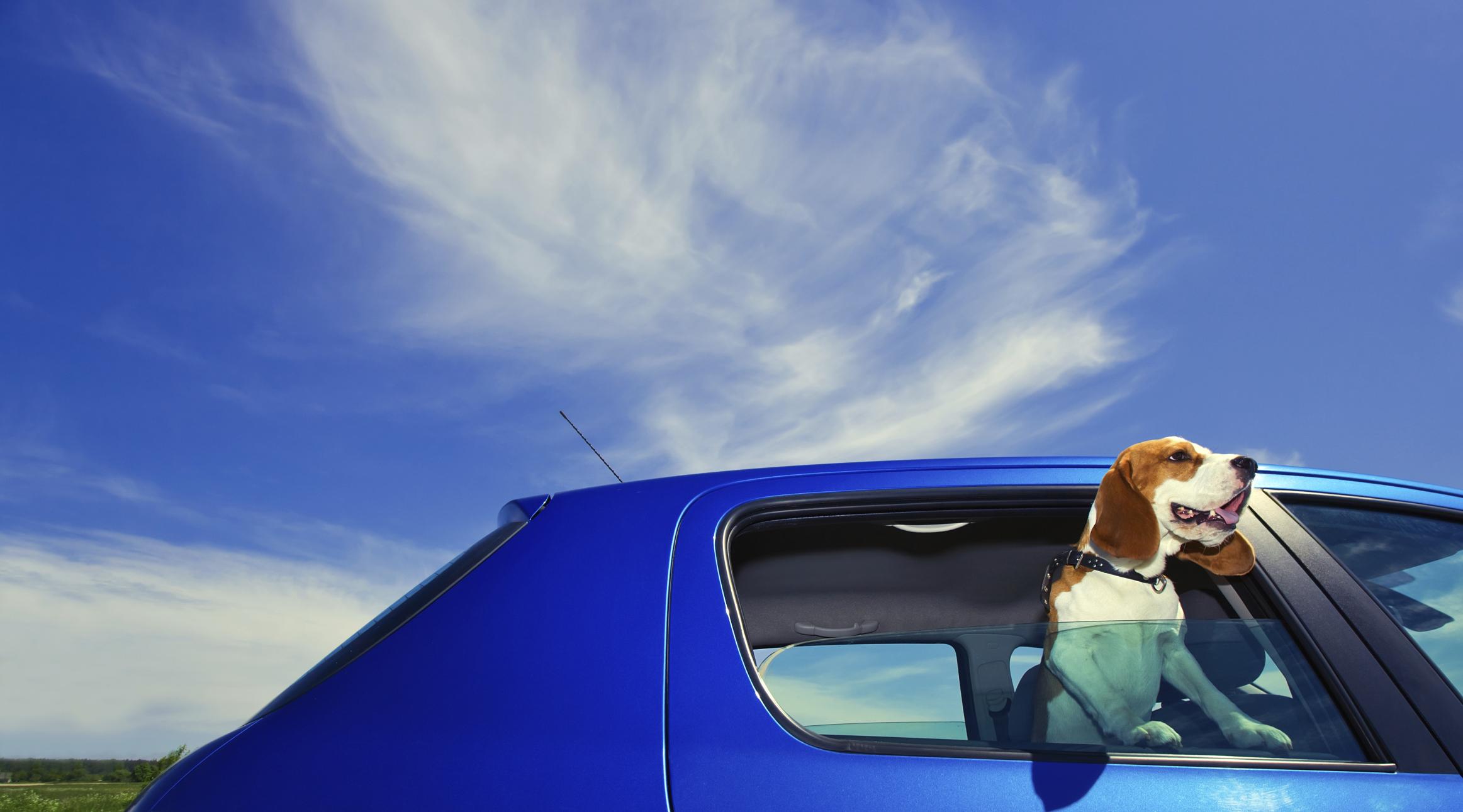 Conoce la forma adecuada de viajar con perros en el coche.