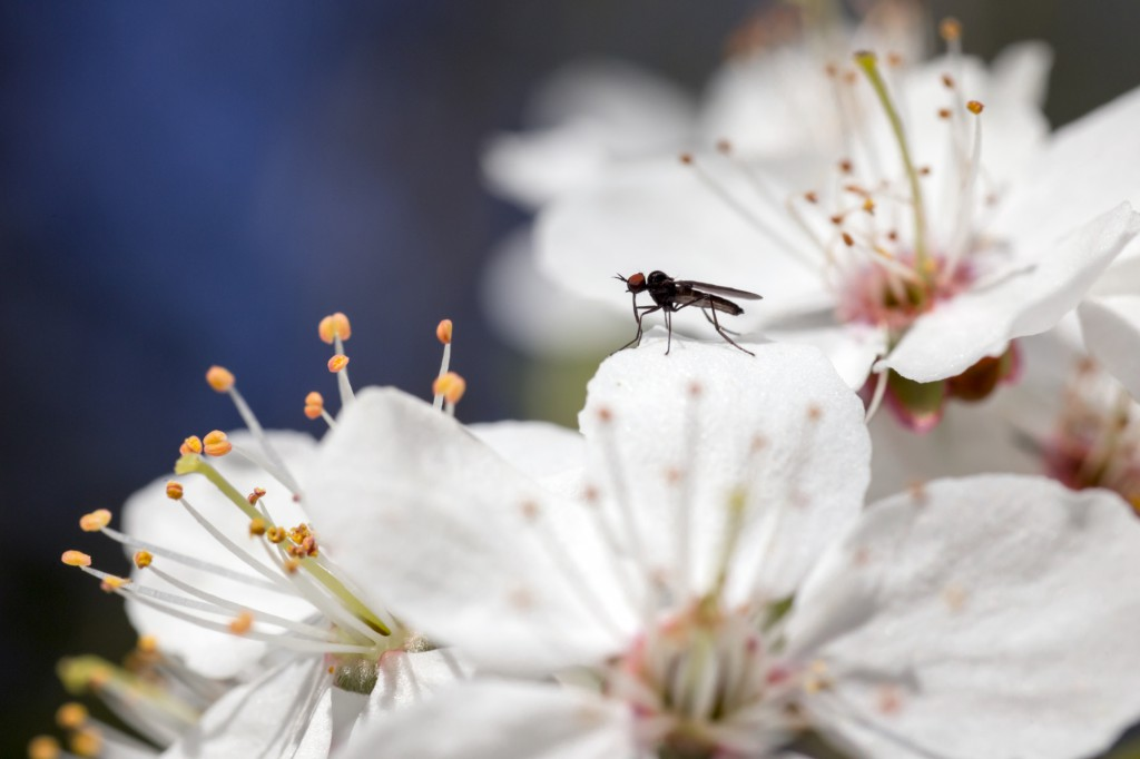 Las plantas antimosquitos son los mejores repelentes naturales.