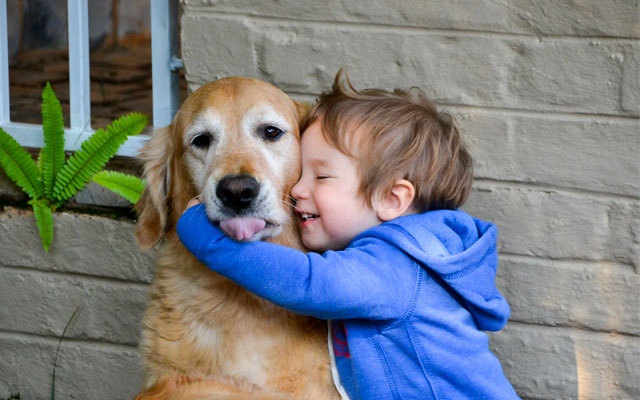 Las mejores razas de perro para tener en un hogar con niños.
