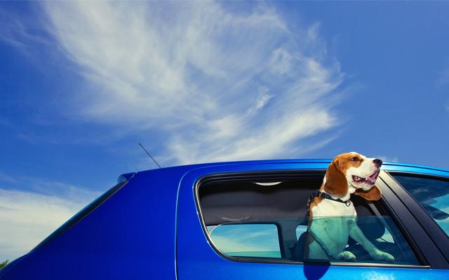 Evita el mareo de los perros en el coche.
