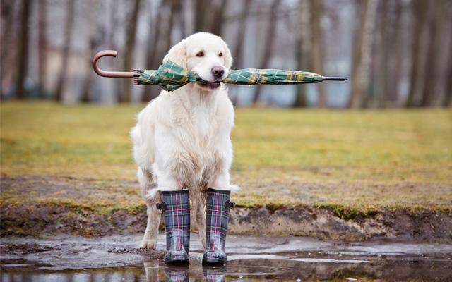 Pasear al perro los días de lluvia.