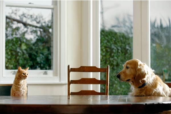 responsabilidad civil para mascotas