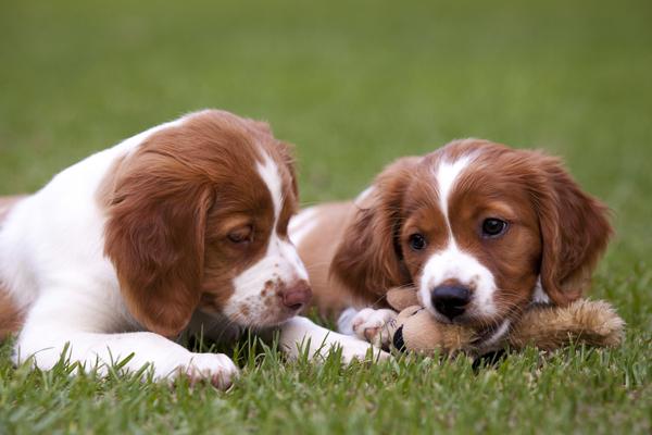 Conoce los nombres de perros más comunes en España.