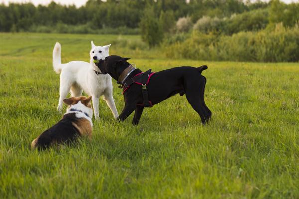 Si necesitas una residencia para mascotas, te contamos todo lo que deberías saber.