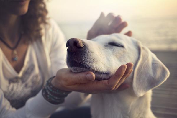 La cobertura para mascotas de tu seguro de hogar