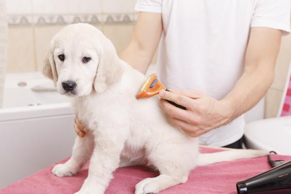 Las pulgas y garrapatas afectan a la salud de tu mascota
