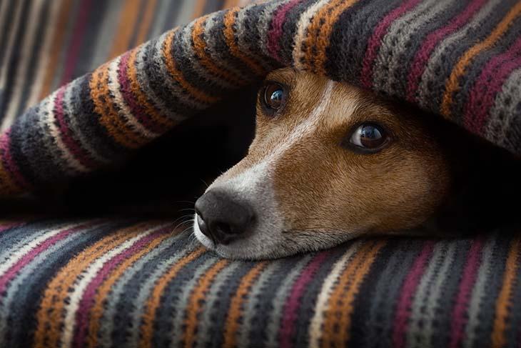 Proteger a las mascotas en invierno para garantizar su bienestar