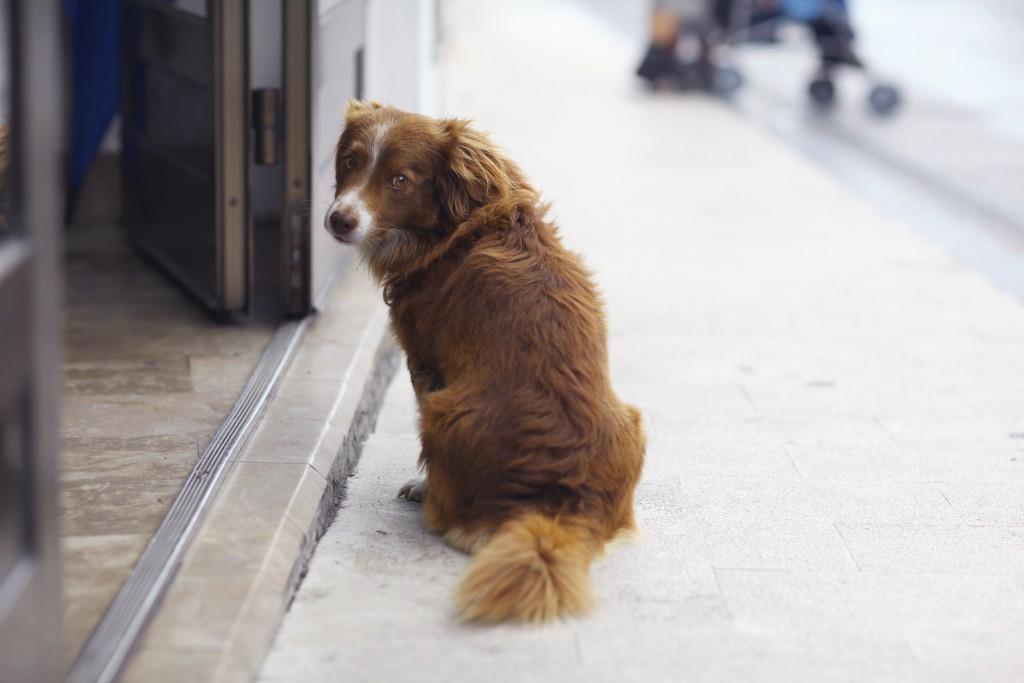 Los consejos clave para encontrar a un perro perdido