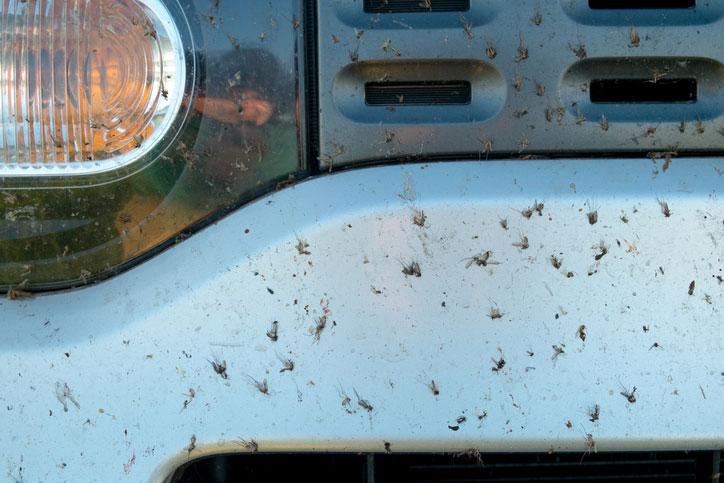 Limpieza casera de los mosquitos del coche