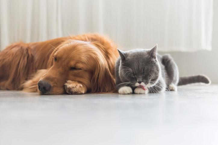 perro o gato, perro o gato para niños, personalidad perro o gato