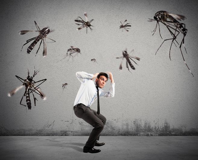 repelente de mosquitos, mejor repelente para mosquitos, repelente casero para mosquito, repelente natural para mosquitos