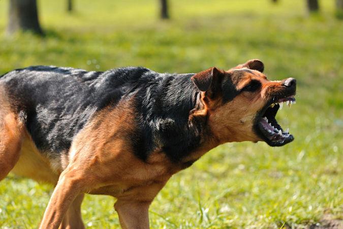 Pasos para presentar una denuncia por mordedura de perro
