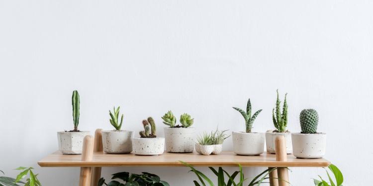 Cuidado de plantas para interiores