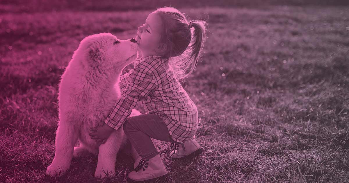 cuidados de un cachorro