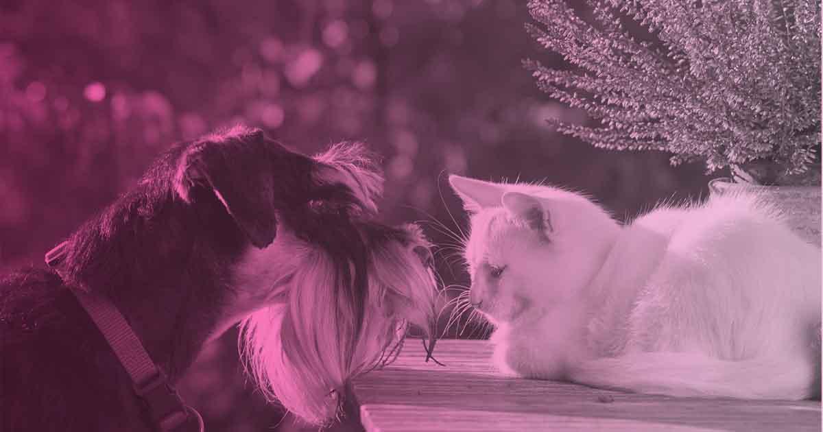 plantas toxicas para gatos y perros
