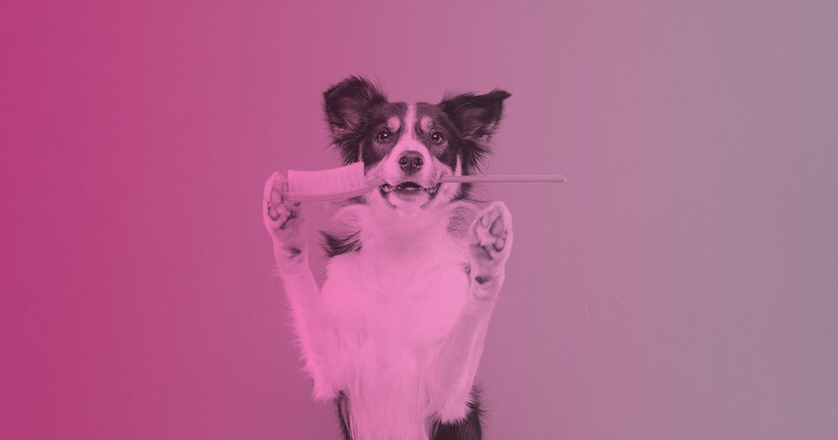 mal aliento en perros