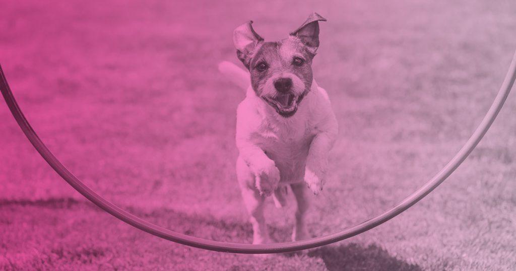 Perros agility