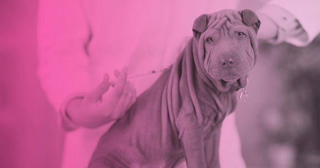 Calendario vacunas perro